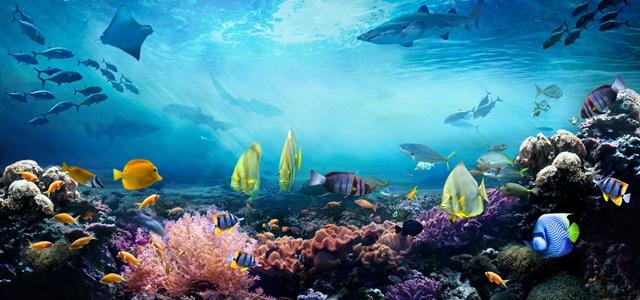 יום האוקיינוסים: העובדות המעניינות והמפתיעות. AdobeStock