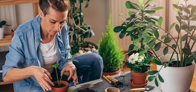 עשו זאת בעצמכם: צמחים שקל לגדל בבית.