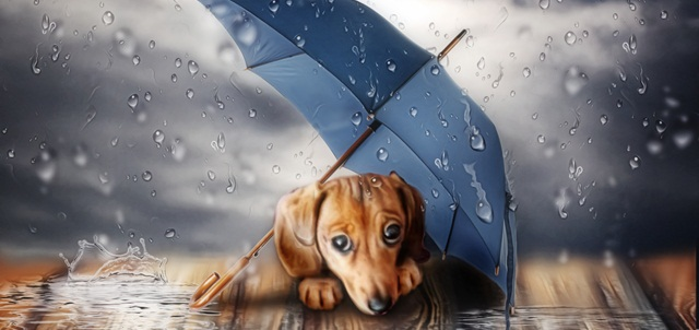 ליל חורף קר? כך תתמודדו עם רעמים, פחדים וכלבים. AdobeStock