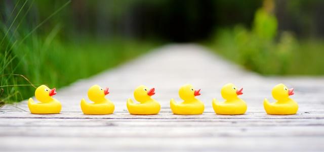 לוח שנה עולמי: ידעתם שיש יום ברווזי הגומי?. AdobeStock