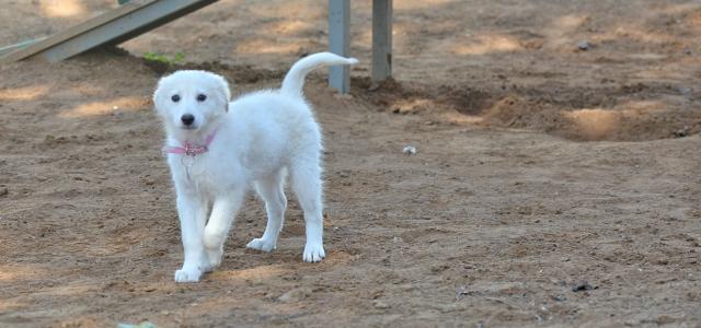 באנו לעזרת חבר: ביבי וסברינה מחכים לכם. אגודת צער בעלי חיים בישראל