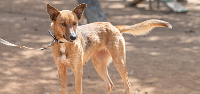 באנו לעזרת חבר: פלוטו וקירה מחכים לכם. אגודת צער בעלי חיים בישראל