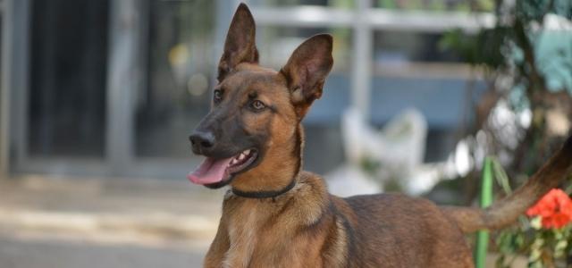 באנו לעזרת חבר: קאיה וקספר מחכים לכם. אגודת צער בעלי חיים בישראל