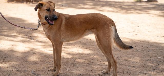 באנו לעזרת חבר: רוז וריילי מחכים לכם. אגודת צער בעלי חיים בישראל