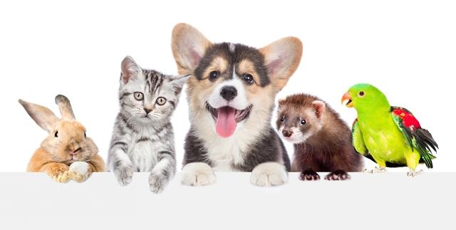 הגרלה על סך 500 שקלים לכבוד יום הכלב הבינלאומי – מנשה בטיטו!. adobestock (אילוסטרציה)